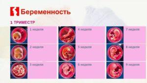 Что можно и нельзя беременным в первом триместре