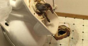 Как сходить по большому в туалет после родов