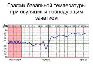 Базальная температура после зачатия в первые дни