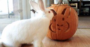 Можно ли тыкву кроликам