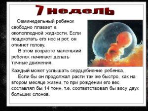 Размер плода 7 недель