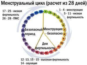 Овуляция на какой день при 28 дневном цикле