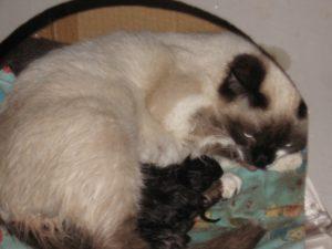 Кошка рожает воды отошли