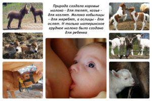 Можно ли кормить молоком коровьим ребенка 2 месяца