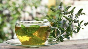 Можно ли беременным пить зеленый чай с мятой