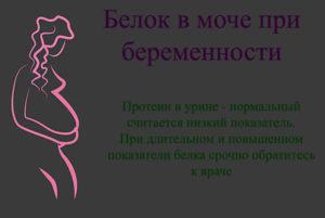 Белок во время беременности