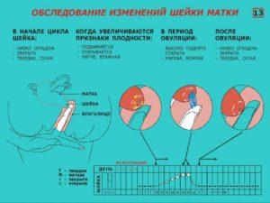 Состояние матки при беременности