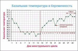 Базальная температура в первые дни после зачатия