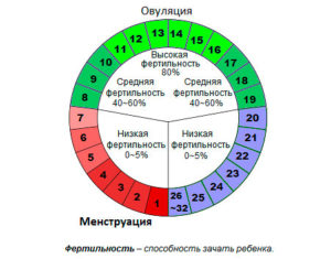 Сколько должен длиться цикл месячных