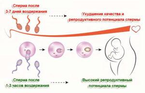 Сколько мужчине воздерживаться перед зачатием
