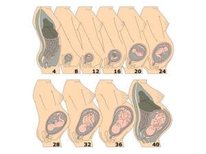 Беременность 20 21 неделя расположение ребенка в матке