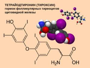 Тироксин за что отвечает