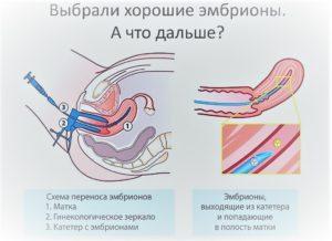 Питание эмбриона после переноса