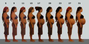 Живот при многоплодной беременности