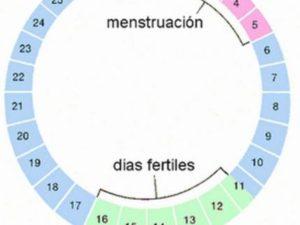 Сколько может длиться цикл месячных