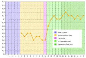 Температура в период овуляции