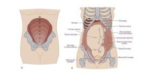 Как болит живот когда растет матка при беременности