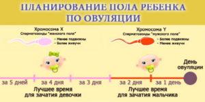 Пол ребенка после овуляции