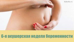 6 я неделя беременности акушерская