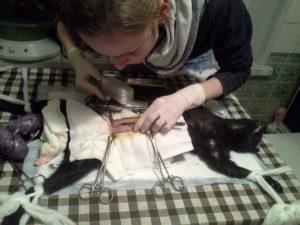 Когда лучше стерилизовать кошку до или после родов
