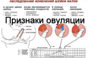 Как определить что произошло зачатие после овуляции