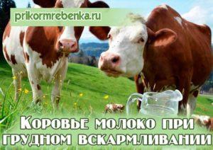 Можно ли при грудном вскармливании пить коровье молоко