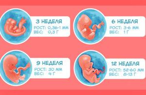 1 триместр беременности по неделям
