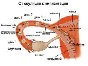 Причины почему не происходит зачатие во время овуляции