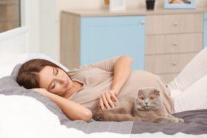 Чувствуют ли кошки беременность женщины
