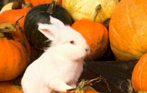 Тыква кроликам можно ли