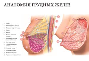Почему после родов обвисает грудь