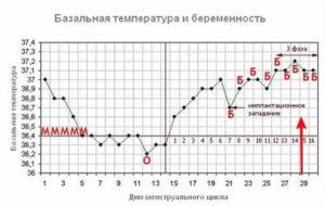 Температура тела после зачатия