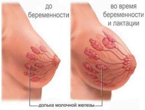 Грудь увеличивается после беременности