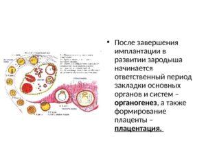 На какой день после оплодотворения происходит имплантация эмбриона