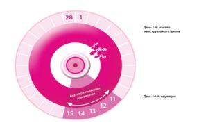Как рассчитать цикл для зачатия