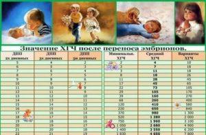 20 день после переноса эмбрионов какая неделя беременности