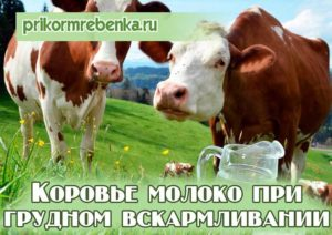 При гв коровье молоко