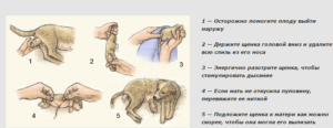 Беременность и роды собаки