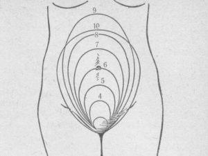 Когда поднимается матка при беременности