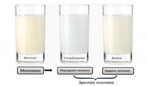 Как узнать что молоко перегорело