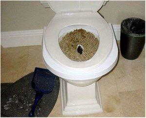 Боюсь сходить в туалет по большому после родов