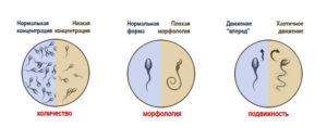 Перед зачатием сколько дней воздержания