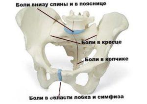 При беременности ноет лобковая кость