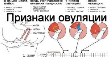 В период овуляции кровь