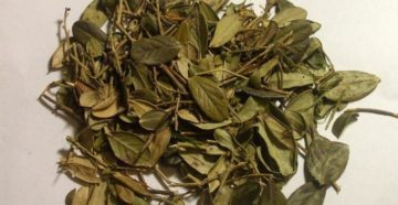 Листья брусники при лактации