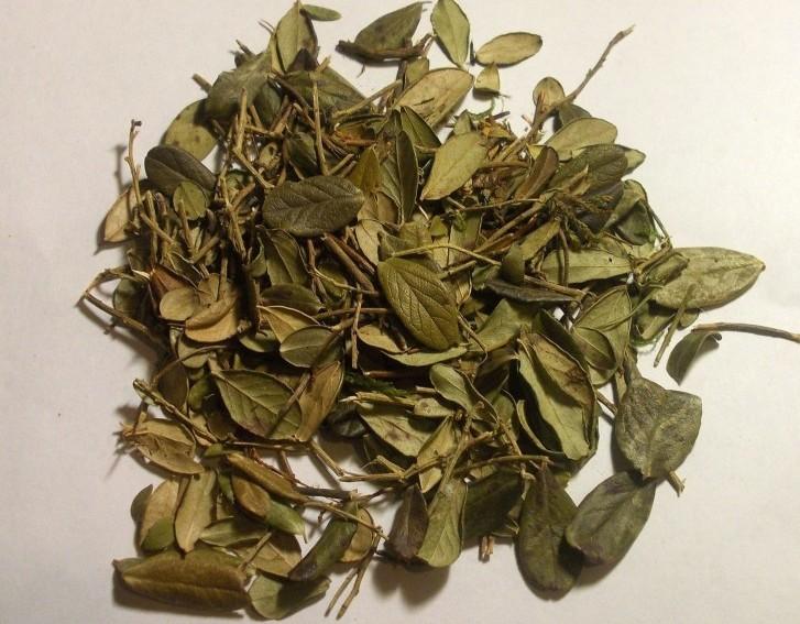 Брусничный лист при гв