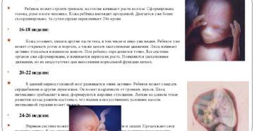 Шевеления плода при второй беременности на каком сроке