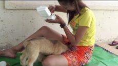 Девушка кормит щенка грудью